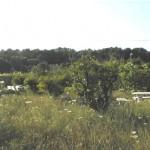 land247-03lrg
